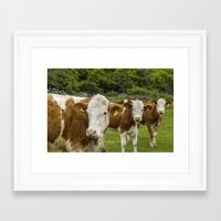 cows Framed Art Prints featuring cows by Annika Erixon