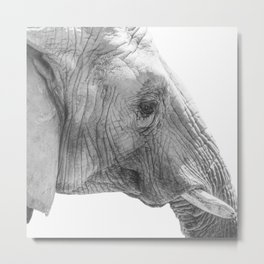 Elephant Portrait Photography  Metal Print