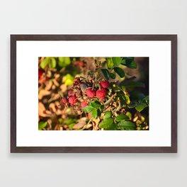 Into the Fall Framed Art Print