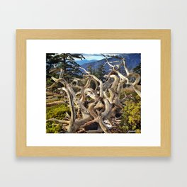 Twisted Branches Framed Art Print