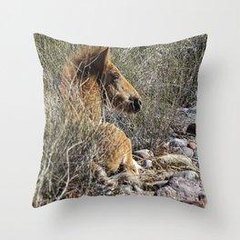 Salt River Foal Finding A Spot to Rest Throw Pillow