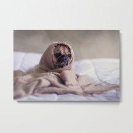 Baby Dog In Blanket Metal Print