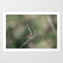 Dainty Nature II Art Print