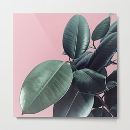 Ficus Elastica #14 #CoralBlush #decor #art #society6 Metal Print