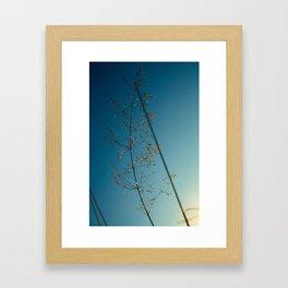 flower photography by Dan Musat Framed Art Print