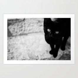 Croatian Kitten Art Print