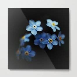 Forget Me Nots on Black Metal Print