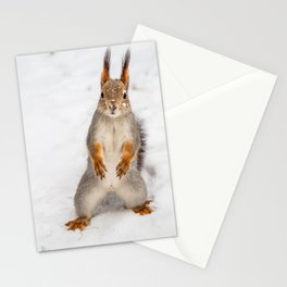 Do you have any boots for squirrels? Stationery Cards