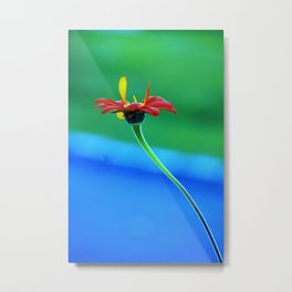 Red Torch Mexican Sunflower Metal Print