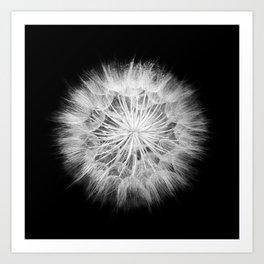 Black and White Dandelion Macro / Nature Photography Art Print