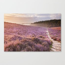 II - Path through blooming heather at sunrise, Posbank, The Netherlands Canvas Print