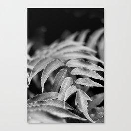 Deep In - leaves & fern Canvas Print