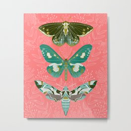 Lepidoptery No. 5 by Andrea Lauren  Metal Print