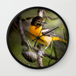 Oriole and Pine cone Wall Clock
