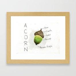 Diagram of an Acorn Framed Art Print