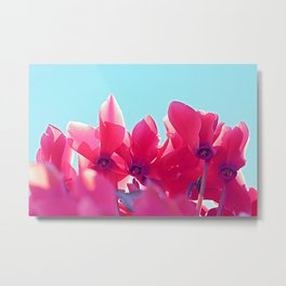 Cyclamen blossom Metal Print