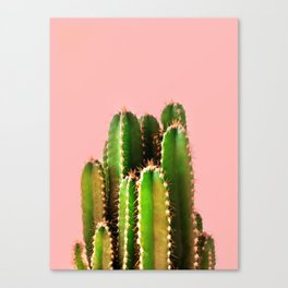 It's Cactus Time Canvas Print