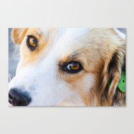 Portrait of a lovely stray dog Canvas Print