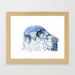 """""""Here's Looking At You"""" painting of a Gyrfalcon by Teresa Thompson Framed Art Print"""