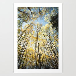 The Aspen Grove - Autumn in Colorado Mountain Decor Art Print