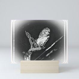Bird Models: Snow Owl Resplendence 01-02 Mini Art Print