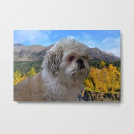 """Denali"" - Lap Dog Metal Print"
