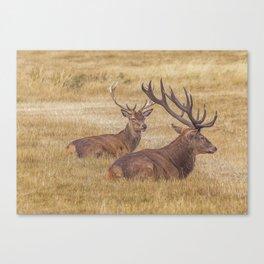 Regal. Canvas Print
