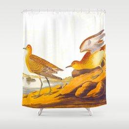 Buff-breasted Sandpiper Bird Shower Curtain