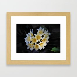 Clivia Framed Art Print