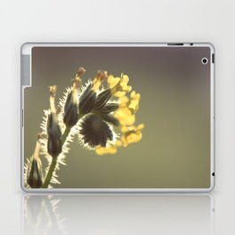 Curl Laptop & iPad Skin