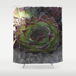 Red and green succulent. Shower Curtain
