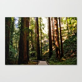 Red Woods I Canvas Print
