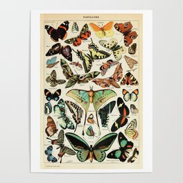 Papillon I Vintage French Butterfly Charts by Adolphe Millot Poster