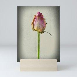 Old Rose on Paper Mini Art Print