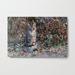 Sitting cat posing Metal Print