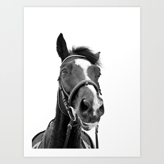 Horse Photo   Black and White by jackyd