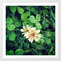 clover Art Prints featuring Clover by Amber Dawn Hilton