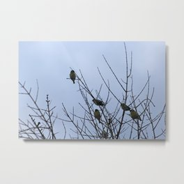Winter Birds on Bare Branches Metal Print