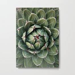 Large Succulent with Tiny Slug Metal Print