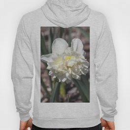 Daffodil in Cream Hoody