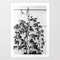 Supra Art Print