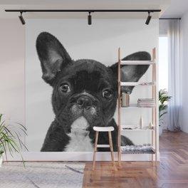 Black and White French Bulldog Wall Mural