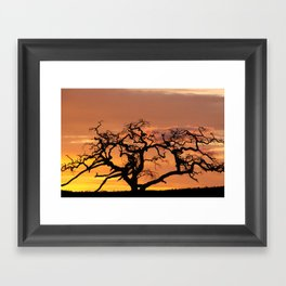 Acacia Trees at Dusk Framed Art Print