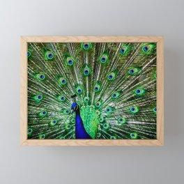 The peacock of Hellabrunn Framed Mini Art Print
