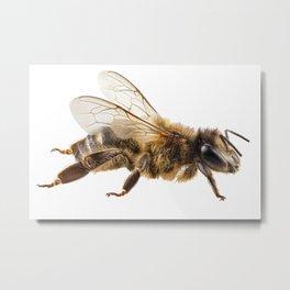 Bee species apis mellifera common name Western honey bee or European honey bee Metal Print
