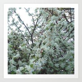 flower and light - White flower 5 Art Print