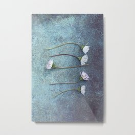 Daisies in a row Metal Print