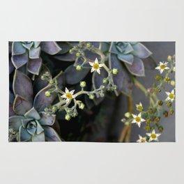 Twinkle, Twinkle, Succulent Stars Rug