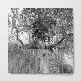 Spanish moss Metal Print