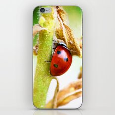 The Shy Ladybug iPhone & iPod Skin